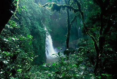 20100228201636-selva.jpg